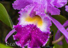 Versuch eine Orchidee zu fotografieren